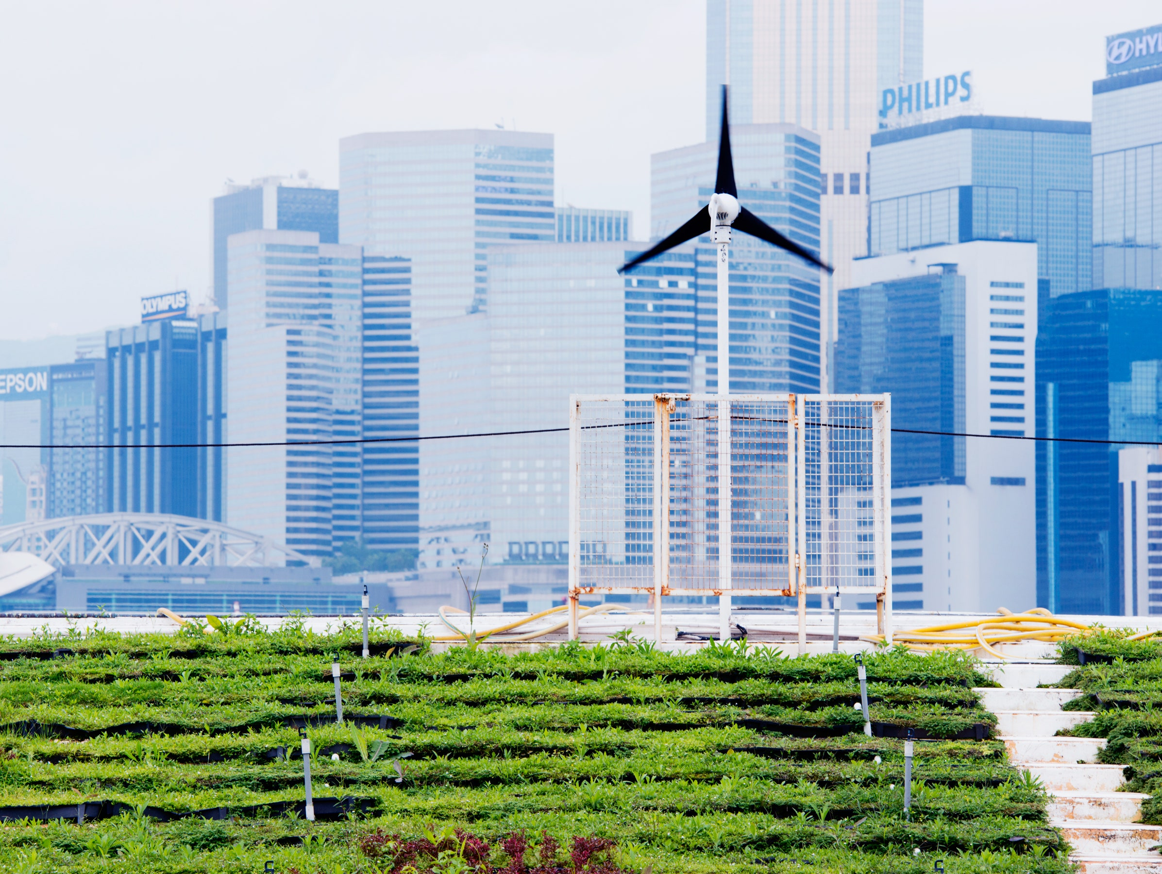 The Futuristic Farms That Will Feed the World
